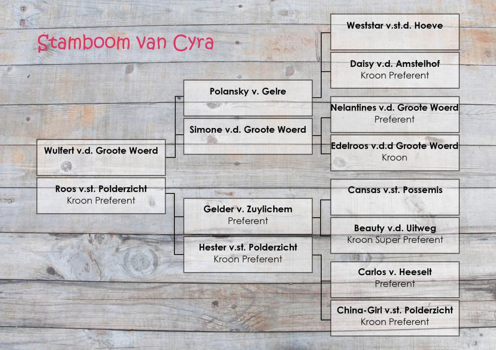 Stamboom Cyra