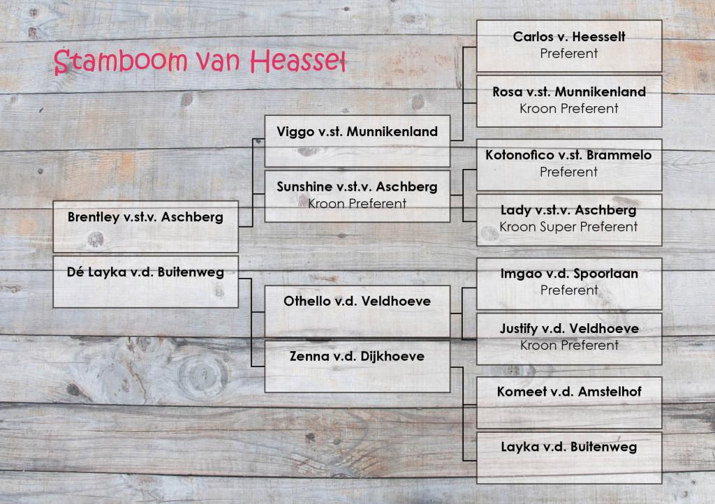 Stamboom Heassel